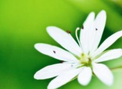 初中语文作文:成长的幸福