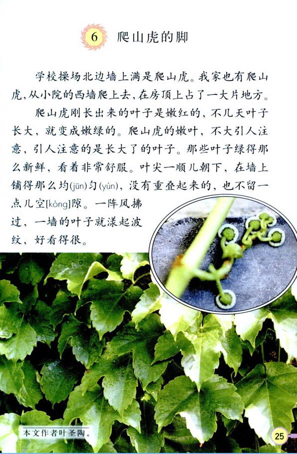 深圳四年级上册语文爬山虎的脚课文