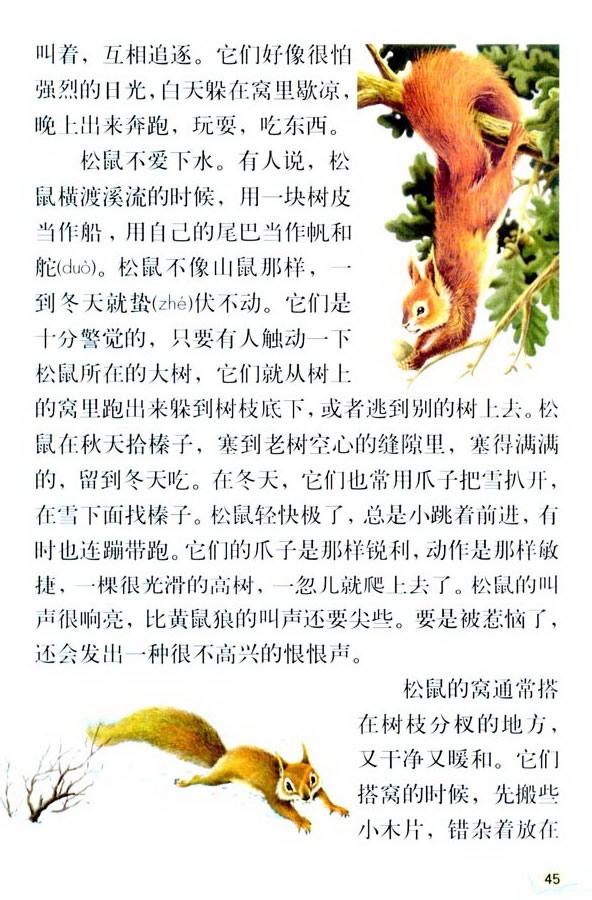 深圳五年级上册语文松鼠课文