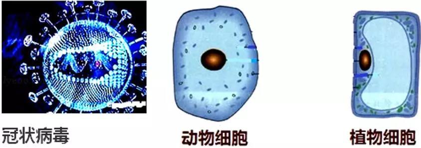 2020年新型冠状病毒肺炎相关生物知识